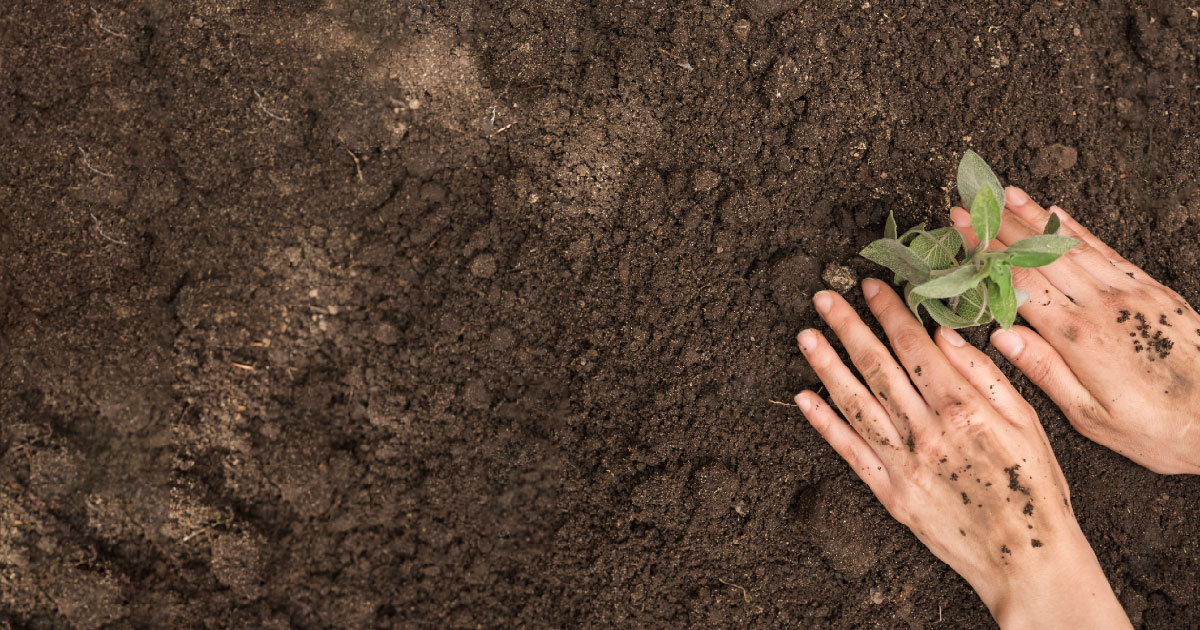 manos sembrando planta en tierra